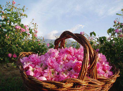 Bulgaria - the Land of Roses and rose oil | Free Sofia Tour