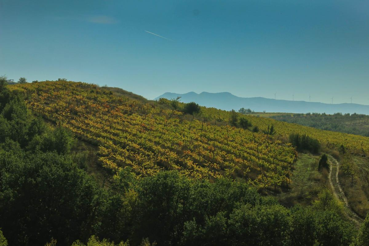 bulgarian wine vinyard
