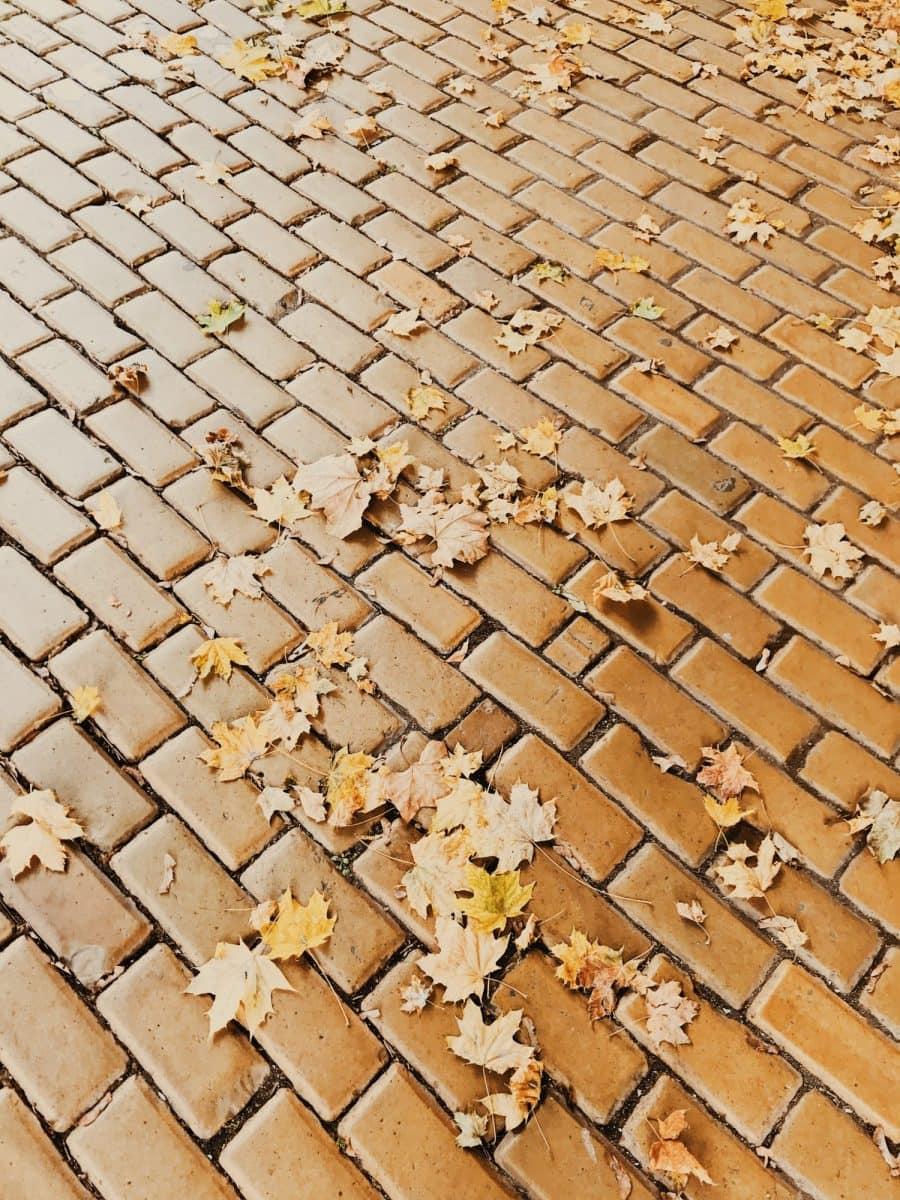 sofia yellow bricks